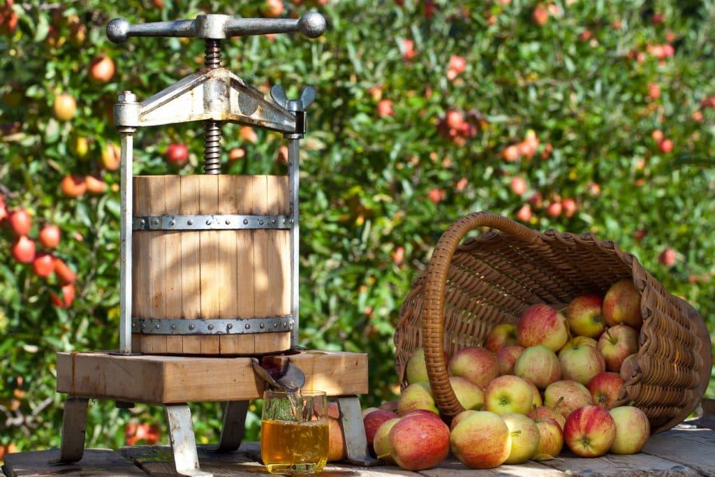 Mahlapress õunamahla valmistamiseks